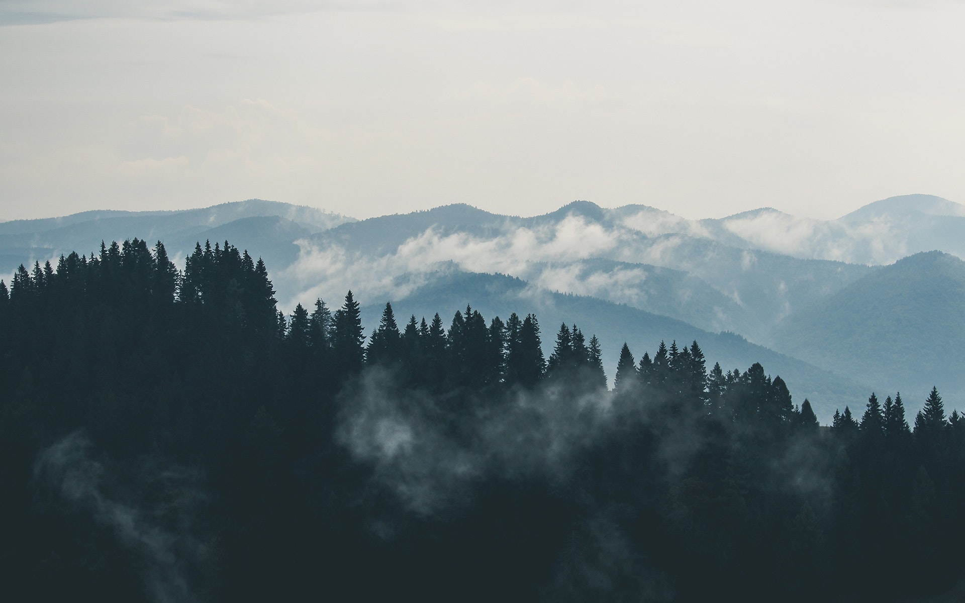 clouds-fog-forest-9754